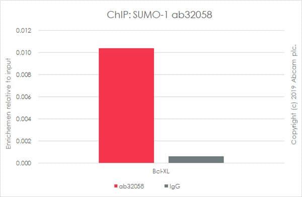 芯片-抗相扑1抗体[Y299]-芯片级(ab32058)