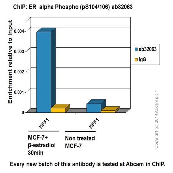 ChIP-抗雌激素受体α抗体[E115]-芯片级(ab32063)