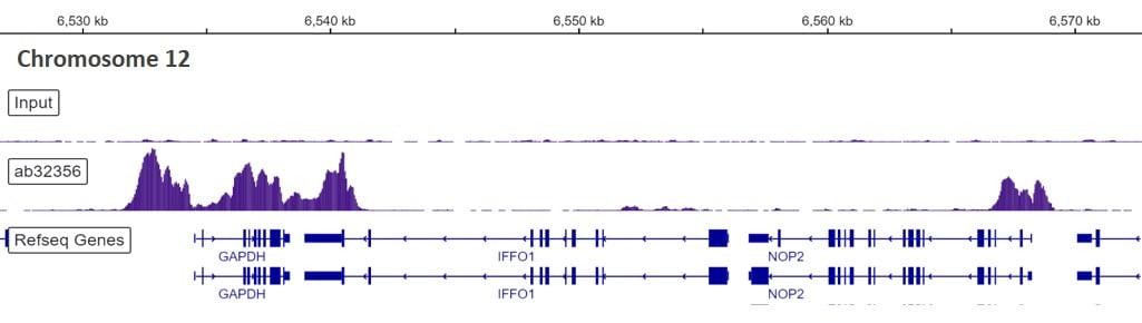 芯片测序-抗组蛋白H3(双甲基K4)抗体[Y47]-芯片级(ab32356)