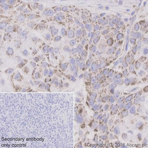 Immunohistochemistry (Formalin/PFA-fixed paraffin-embedded sections) - Anti-Bak antibody [Y164] (ab32371)