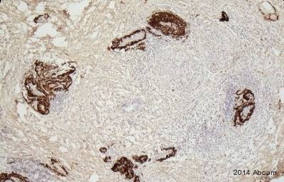 Immunohistochemistry (Formalin/PFA-fixed paraffin-embedded sections) - Anti-CTRP5 antibody (ab36893)