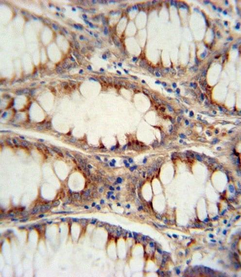 Immunohistochemistry (Formalin/PFA-fixed paraffin-embedded sections) - Anti-Neurogenin3 antibody (ab38548)