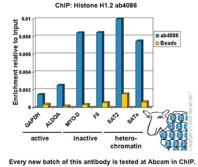 ChIP - Anti-Histone H1.2 antibody - ChIP Grade (ab4086)