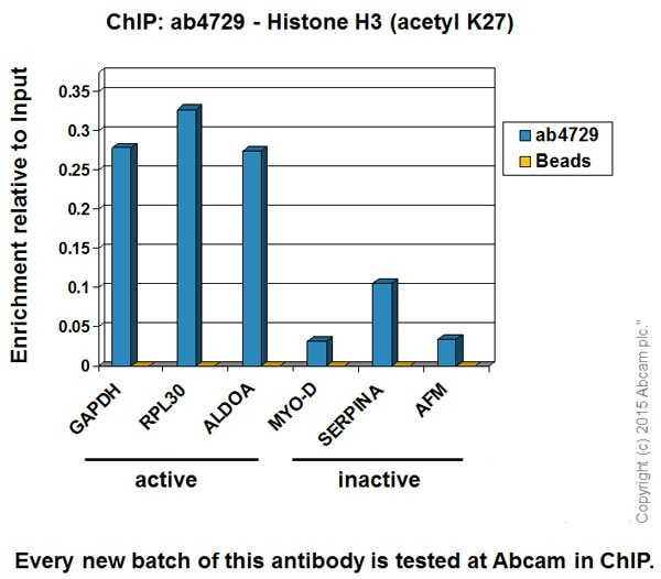 ChIP - Anti-Histone H3 (acetyl K27) antibody - ChIP Grade (ab4729)