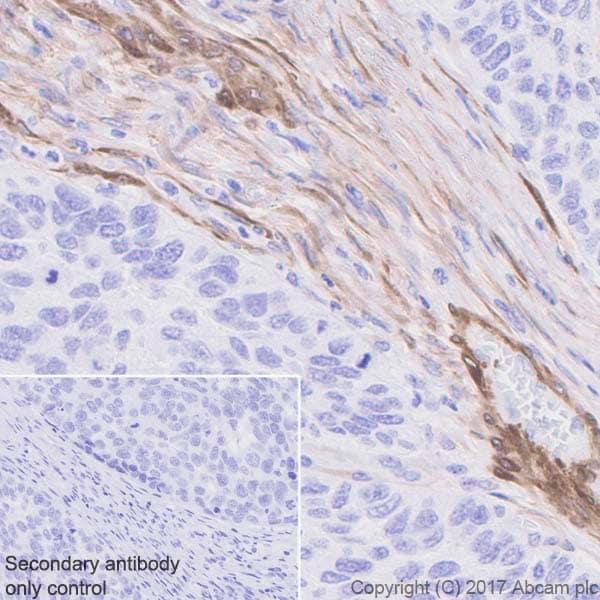 免疫组织化学(福尔马林/PFA固定石蜡切片)-抗钙调素1抗体[EP798Y](ab46794)