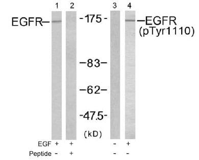 Western blot - EGFR (phospho Y1110) antibody (ab47370)