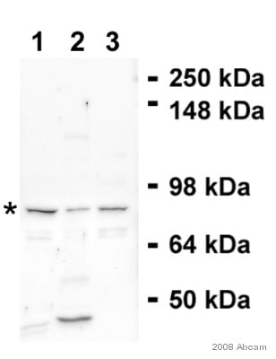 Western blot - EPC1 antibody (ab5514)
