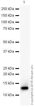 Western blot - Anti-Histone H4 (symmetric di methyl R3) antibody (ab5823)
