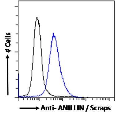Flow Cytometry - Anti-Anillin antibody (ab5910)