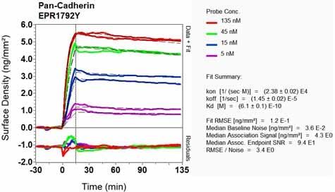 OI-RD Scanning - Anti-pan Cadherin antibody [EPR1792Y] - Intercellular Junction Marker (ab51034)
