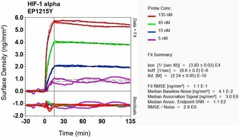 其他-抗HIF-1α抗体[EP1215Y](ab51608)