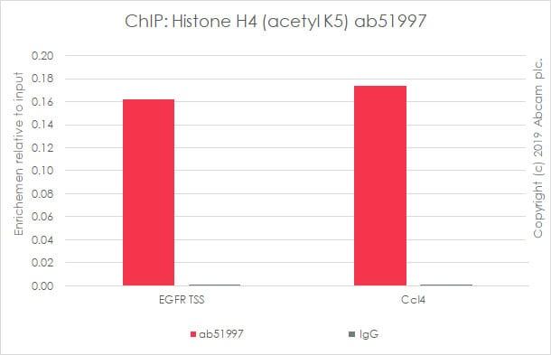 芯片-抗组蛋白H4(乙酰基K5)抗体[EP1000Y]-芯片级(ab51997)