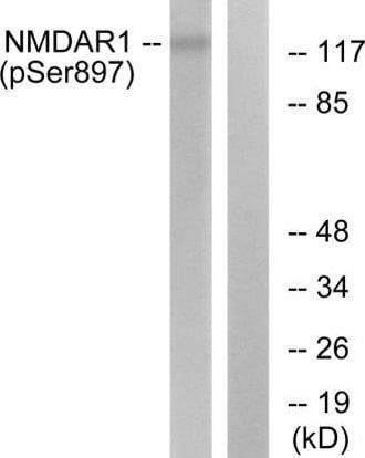 Western blot - Anti-NMDAR1 (phospho S897) antibody (ab52184)