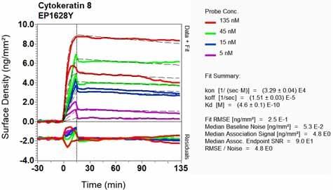 OI-RD Scanning - Anti-Cytokeratin 8 antibody [EP1628Y] - Cytoskeleton Marker (ab53280)