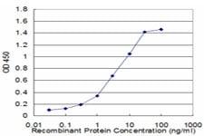 ELISA - Anti-FLIP antibody (ab56531)