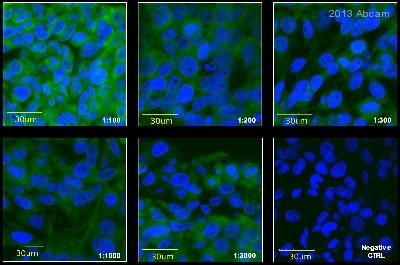 Immunocytochemistry/ Immunofluorescence - Anti-BMP11 antibody (ab56645)