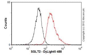 Flow Cytometry - Anti-SGLT2 antibody (ab58298)