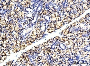 Immunohistochemistry (Formalin/PFA-fixed paraffin-embedded sections) - Anti-NKCC1 antibody (ab59791)