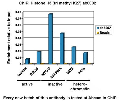 ChIP - Anti-Histone H3 (tri methyl K27) antibody [mAbcam 6002] - ChIP Grade (ab6002)