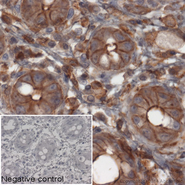 Immunohistochemistry (Formalin/PFA-fixed paraffin-embedded sections) - Goat F(ab')2 Anti-Rabbit IgG F(ab')2 (HRP) preadsorbed (ab6112)