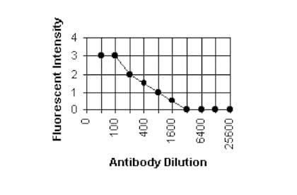 Immunocytochemistry/ Immunofluorescence - Anti-Cytomegalovirus antibody [6F12] (ab6500)
