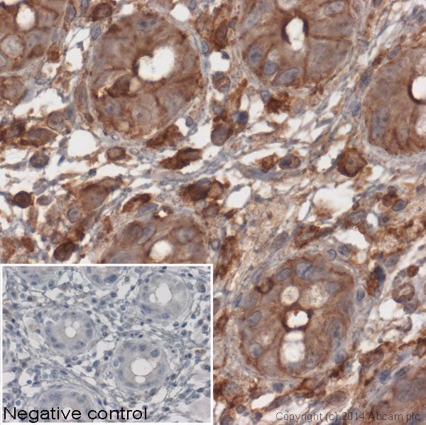 Immunohistochemistry (Formalin/PFA-fixed paraffin-embedded sections) - Goat Anti-Mouse IgG H&L (HRP) (ab6789)