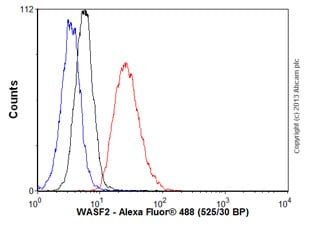 Flow Cytometry - Anti-WASF2 antibody (ab60722)