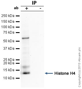 Immunoprecipitation - Anti-Histone H4 antibody (ab61255)