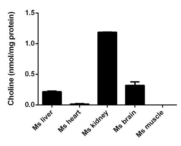 Functional Studies - Choline/Acetylcholine Assay Kit (ab65345)