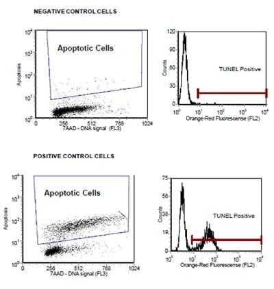 In Situ BrdU-Red DNA Fragmentation (TUNEL) Assay Kit (ab66110)