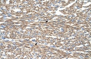 Immunohistochemistry (Formalin/PFA-fixed paraffin-embedded sections) - Anti-COX IV antibody (ab66739)