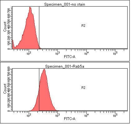 Flow Cytometry - Anti-Rab5 antibody [3A4] (ab66746)
