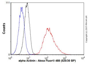 Flow Cytometry - Anti-alpha Actinin antibody [EP2527Y] (ab68194)