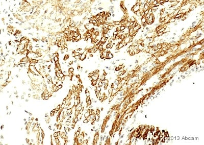Immunohistochemistry (Formalin/PFA-fixed paraffin-embedded sections) - Anti-HCN4 antibody (ab69054)