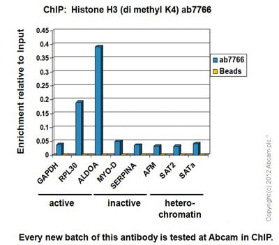 ChIP - Anti-Histone H3 (di methyl K4) antibody - ChIP Grade (ab7766)