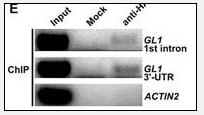 ChIP - Anti-HA tag antibody - ChIP Grade (ab71113)