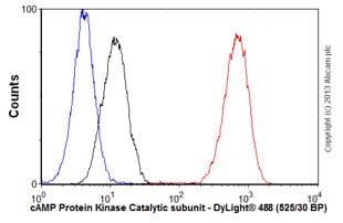 Flow Cytometry - Anti-cAMP Protein Kinase Catalytic subunit antibody [EP2102Y] (ab76238)