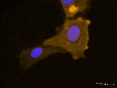 Immunocytochemistry/ Immunofluorescence - Anti-RPE65 antibody [401.8B11.3D9] (ab78036)