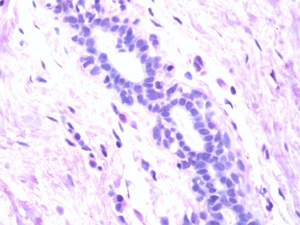 Immunohistochemistry (Formalin/PFA-fixed paraffin-embedded sections) - Anti-SLC40A1 antibody (ab78066)