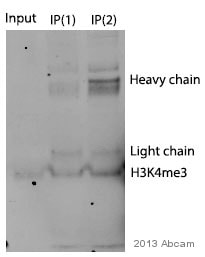 Immunoprecipitation - Anti-Histone H3 (tri methyl K4) antibody - ChIP Grade (ab8580)