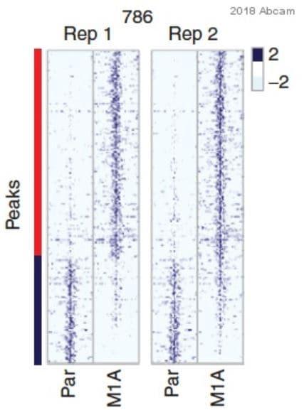 ChIP - Anti-Histone H3 (mono methyl K4) antibody - ChIP Grade (ab8895)