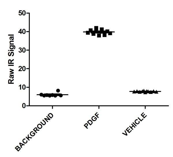 In-Cell ELISA - Anti-AKT1 (phospho S473) [EP2109Y] antibody (ab81283)
