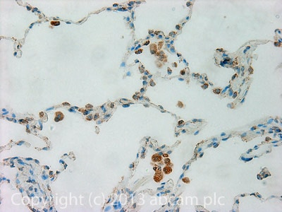 Immunohistochemistry (Formalin/PFA-fixed paraffin-embedded sections) - Anti-TAZ antibody (ab84927)