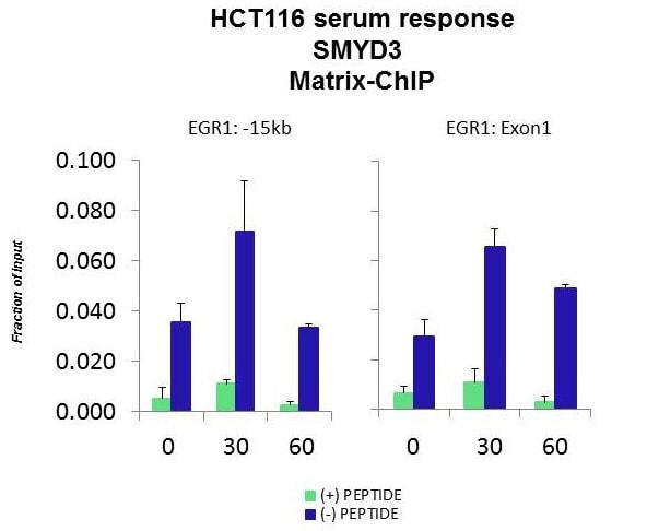 ChIP - Anti-SMYD3 antibody (ab85277)
