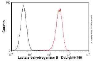 Flow Cytometry - Anti-Lactate Dehydrogenase B antibody [60H11] (ab85319)