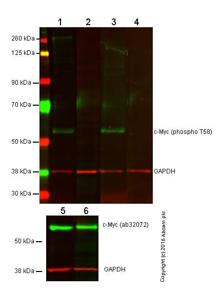 Western blot - Anti-c-Myc (phospho T58) antibody (ab85380)