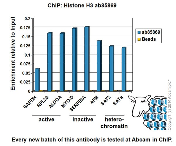ChIP - Anti-Histone H3 antibody (ab85869)