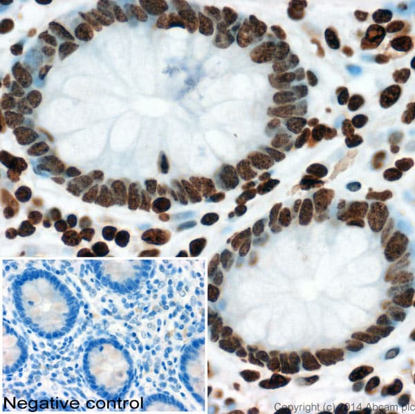 Immunohistochemistry (Formalin/PFA-fixed paraffin-embedded sections) - Anti-Histone H3 antibody - ChIP Grade (ab85869)