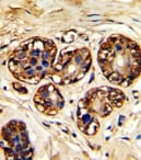 Immunohistochemistry (Formalin/PFA-fixed paraffin-embedded sections) - Anti-LAT antibody (ab86751)