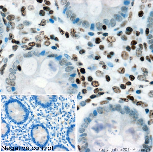Immunohistochemistry (Formalin/PFA-fixed paraffin-embedded sections) - Anti-Histone H1x antibody (ab88681)